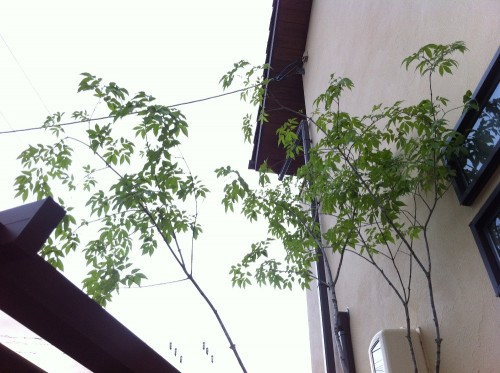 広島市佐伯区 F様邸ブログ3