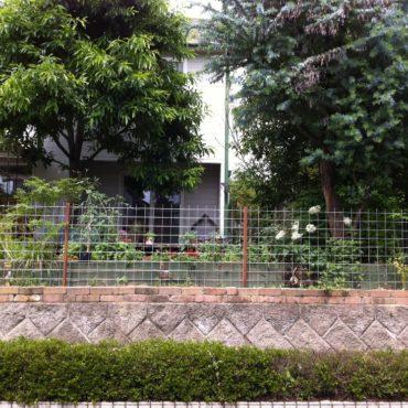 フェンスのその後・・・