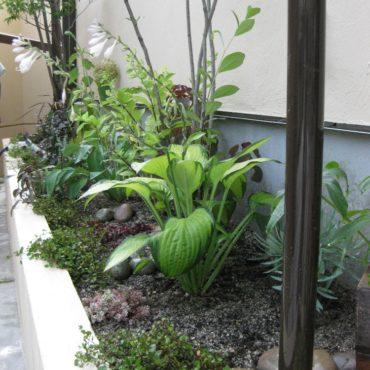ちょっとした場所にも植栽を・・・。