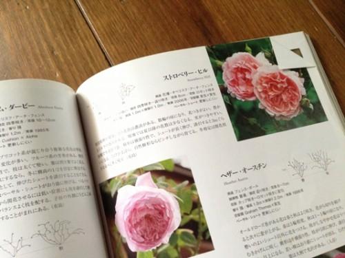 バラの本2