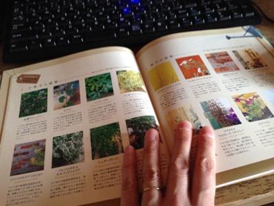七栄グリーンのコンテナスタイル