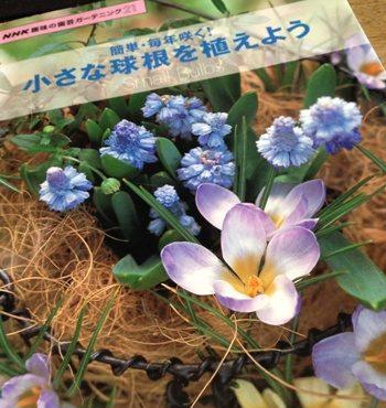 簡単・毎年咲く! 小さな球根を植えよう