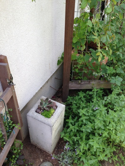 フェンス基礎ブロックへ多肉寄せ植え