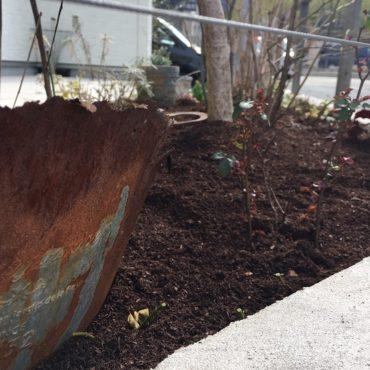 3月はじめから庭掃除の時期ですよ^^